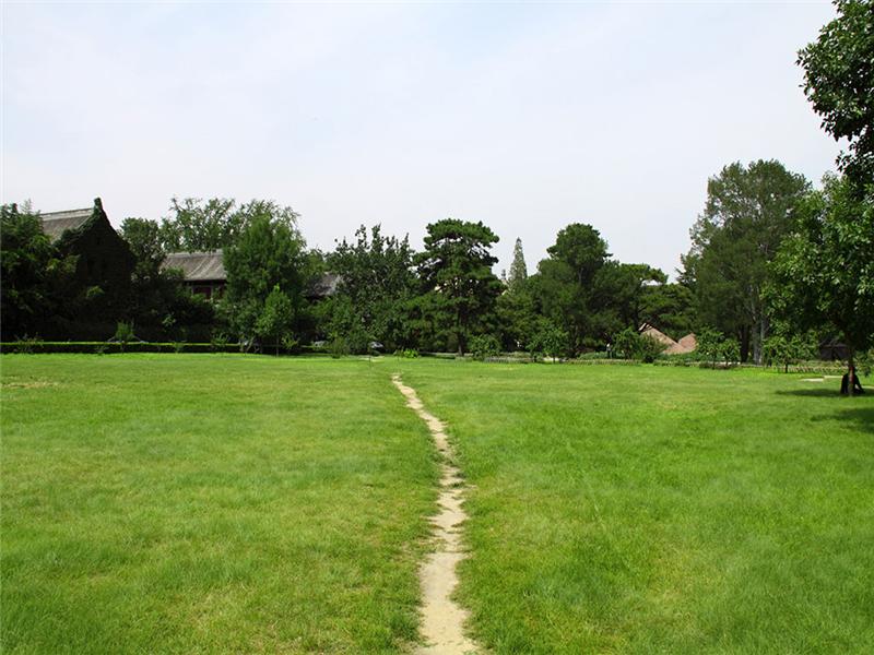 北京大学绿色草坪